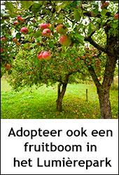 adopteer ook een fruitboom in het Lumièrepark