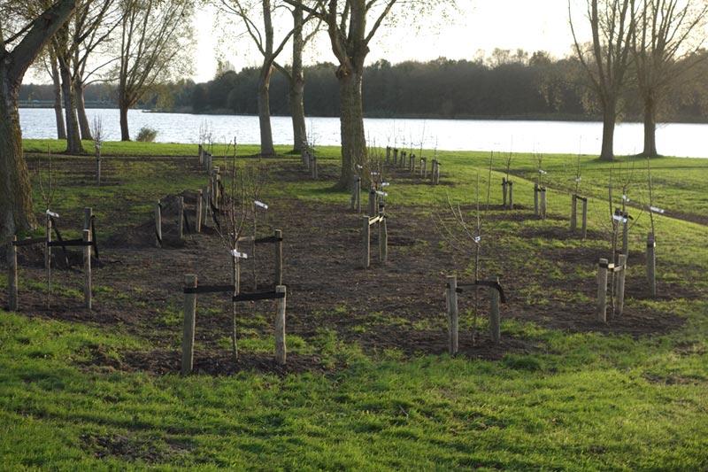 De jonge boomgaard in het Lumièrepark