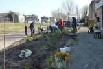 20140314 rozen planten Judy Garlandhof