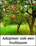 Adopteer een fruitboom